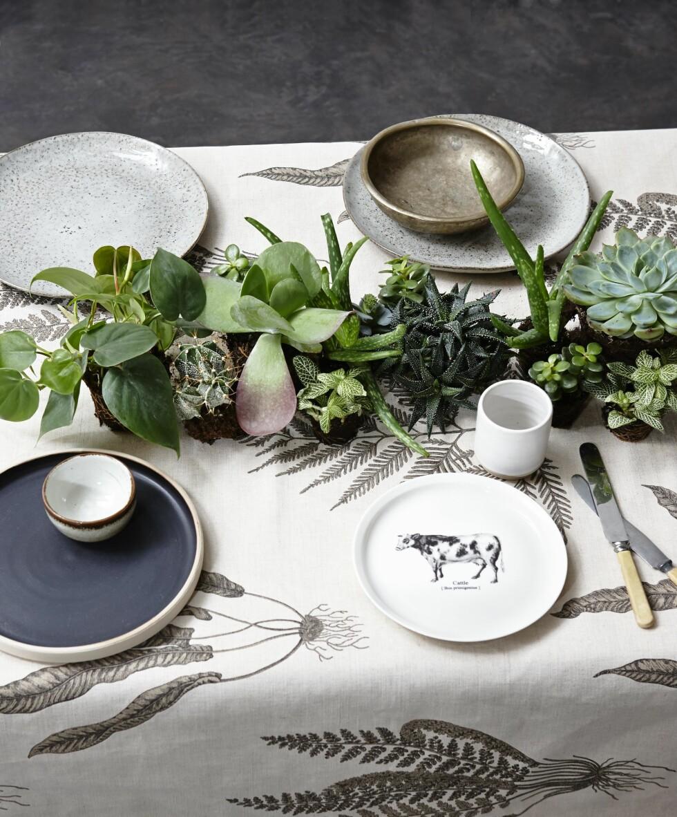 DEKK BORDET: Bruk grønne planter til å gi ditt oppdekede bord et helt nytt uttrykk!  Foto: Per Gunnarson
