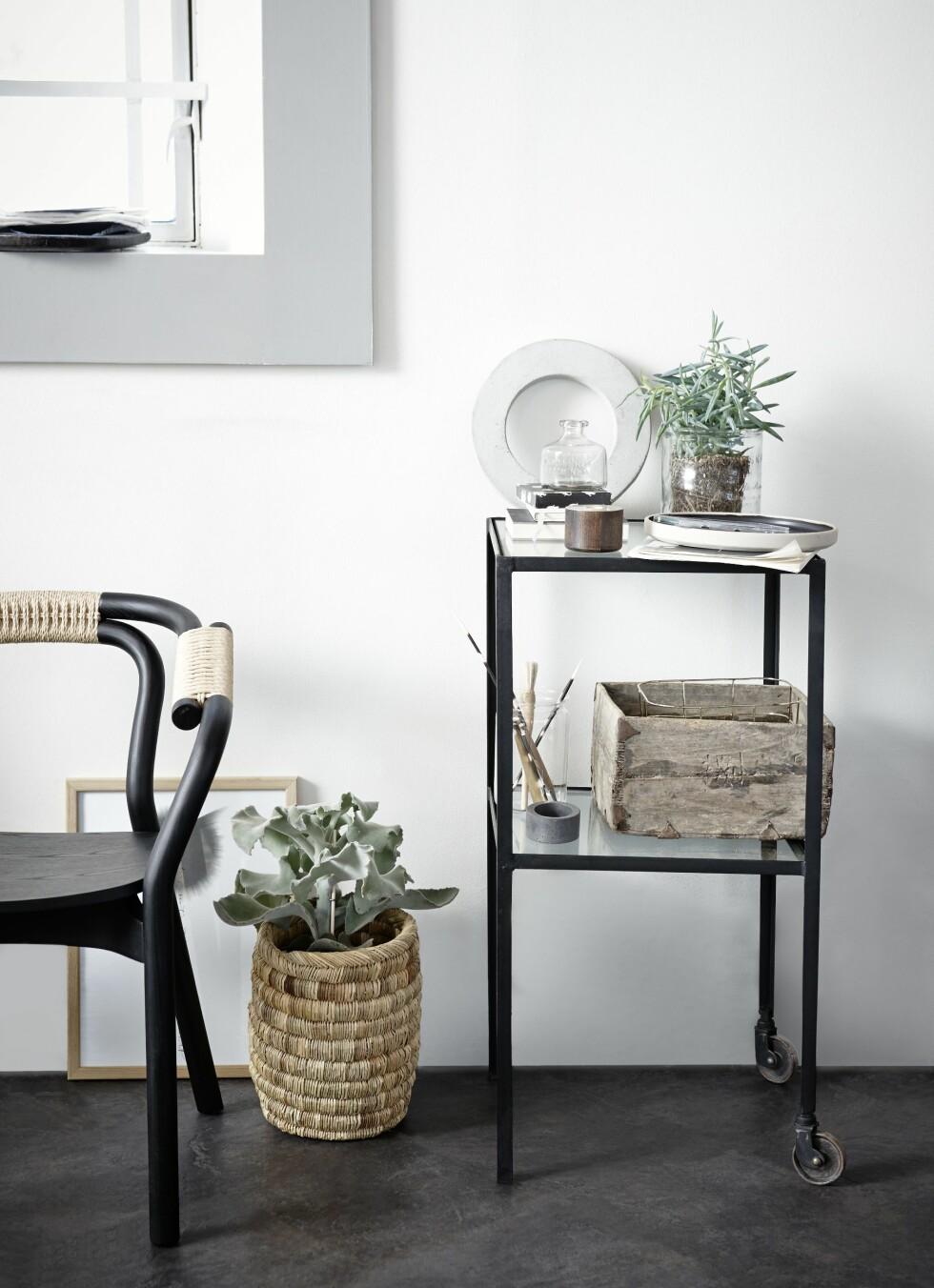 VIS RØTTENE: Bruk en glasspotte, da får du naturen inn i hjemmet!  Foto: Per Gunnarson