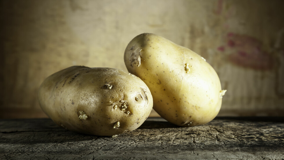 VÆR OBS: Poteter med spirer kan gi forgiftning. Foto: calamardebien - Fotolia