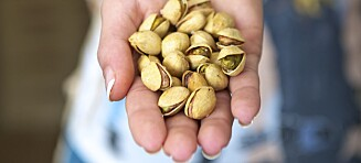Spis to håndfuller pistasjnøtter om dagen