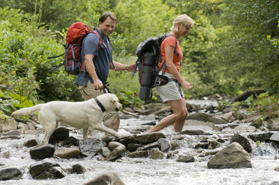 I SKOG OG MARK: Dersom du har gått tur i skog eller kratt kan det være lurt å sjekke pelsen på hunden når dere kommer hjem. Bruk gjerne et flåttmiddel dersom du skal gå i områder der dyret er utsatt, da vil du minske risikoen for et flåttbitt. Foto: Gorilla - Fotolia