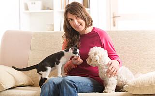 Har du hund eller katt?