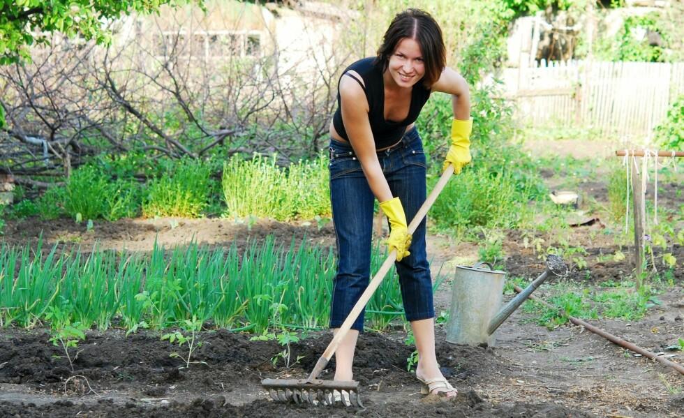 <strong>VÅRPLANTING:</strong> Etablerte planter ute i hagen har større sannsynlighet for å overleve tiden du er borte på ferie.  Foto: Colourbox