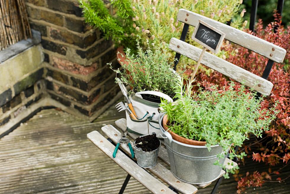 <strong>BRUK STORE POTTER:</strong> Et triks for å få plantene til å vare lenger, er å bruke større potter med plass til mer jord. Foto: Image Source/All Over Press