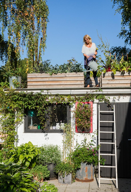 LITEN PLASS? Da gjør du som Dorthe og lager kjøkkenhage på taket! Foto: All Over Press