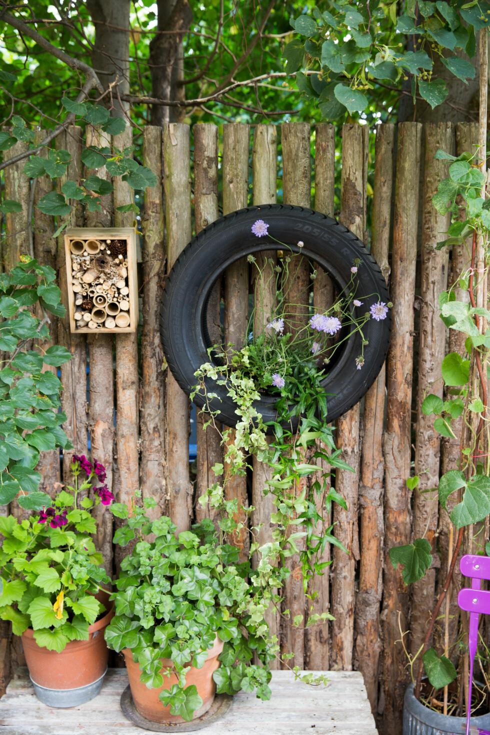 HENGENDE HAGE: Kontrastfylt med vakre blomster i et bildekk - og noe alle nabo'ne ikke har. Foto: All Over Press
