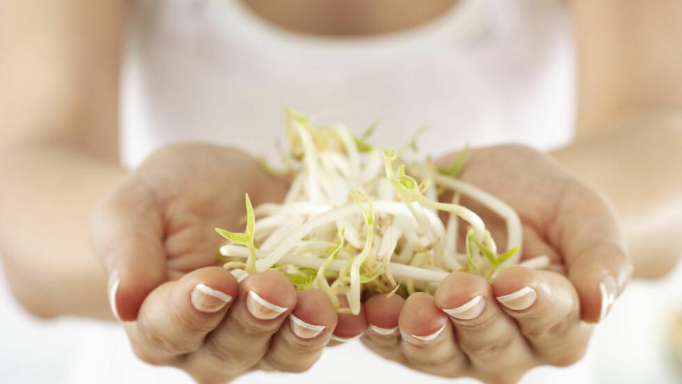 NÆRINGSRIKT: Visste du at spirer består av den konsentrerte næringen fra frøet, og har et høyere innhold av mineraler og vitaminer enn ferdige utviklede planter?