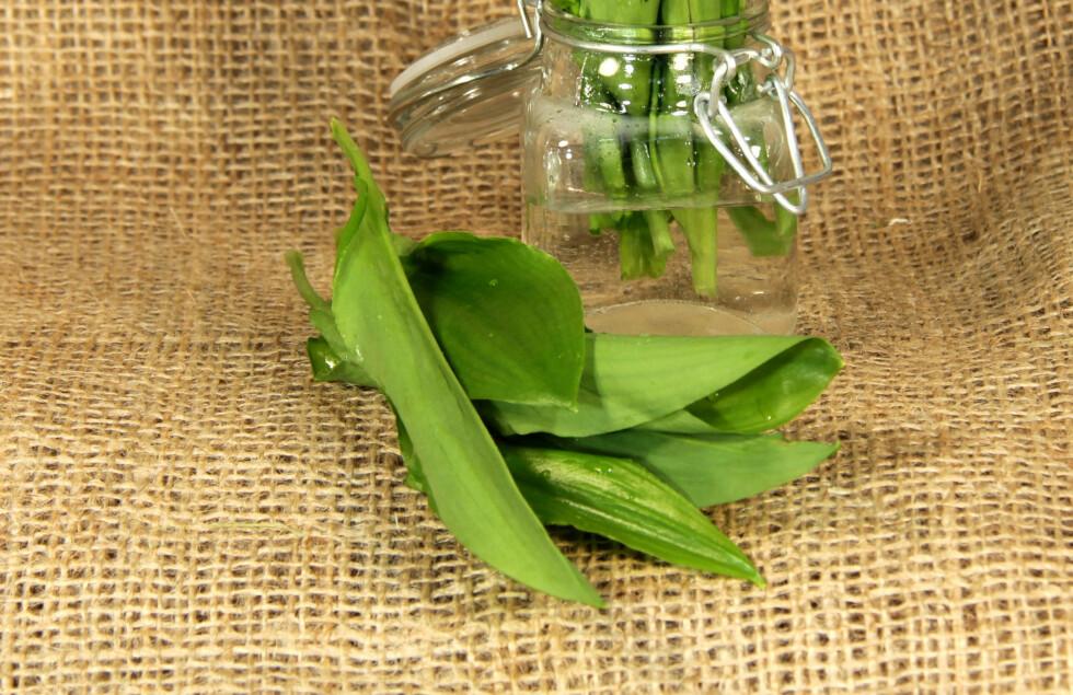 JUTEPLANTEN: Kjenner du igjen strisekken? Vel, planten den er laget av kan faktisk spise.  Foto: TwilightArtPictures - Fotolia