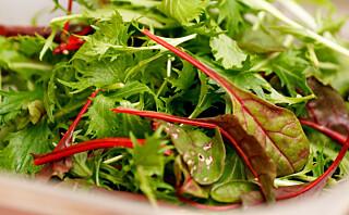 Den beste salaten du kan velge