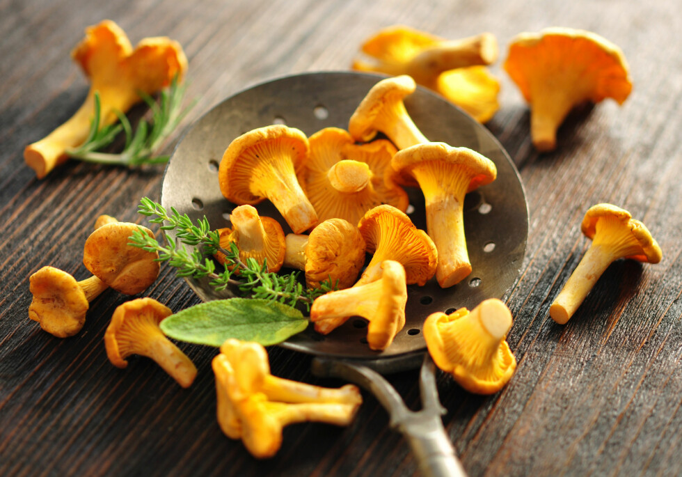 KANTARELLER: Gull å finne på soppturen. Smørsteker du dem får du fram den gode smaken, og de kan godt være hovedingrediensen i et måltid. Foto: photocrew - Fotolia