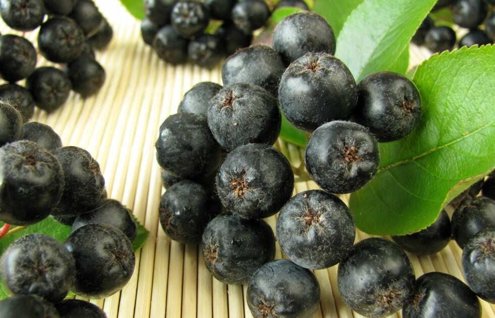 HØRT OM ARNOIABÆR? Bærene er foreløbig ikke så kjent i Norge, men inneholder faktisk opp mot to til tre ganger så mye antioksidanter som blåbær og krekling. Du kan få kjøpt bærene som juice på helsekosten og på nett.  Foto: Thinkstock.com