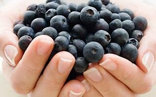 Frosne blåbær kan være bedre enn ferske