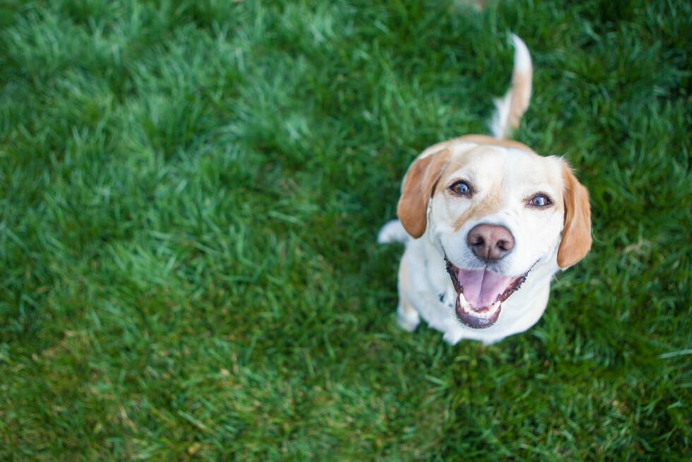 For mye menneskeliggjøring av hunden kan være skadelig