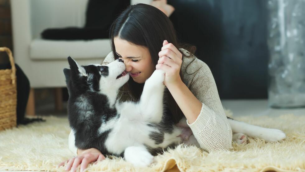 <strong>HUND:</strong> Hunden er menneskets beste venn, og det er bare sunt for begge å ha et nært forhold til hunden sin. Noen drar imidlertid noen ting litt for langt, slik at hunden ikke får være hund lenger.  Foto: Scanpix