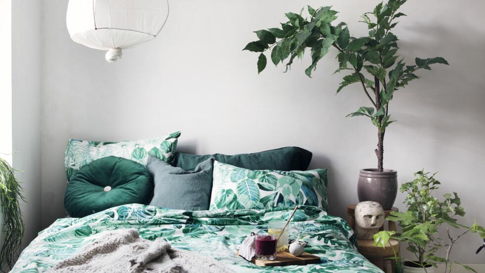 INTERIØRTIPS: Det skal ikke mye til for å pimpe opp hjemmet. Du kan lett fikse opp flere rom på en helg, uten at du blakker deg!  Foto: Yvonne Wilhelmsen/All Over Press
