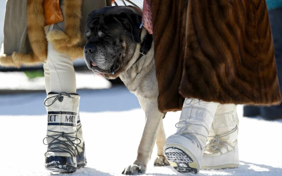 Lys pels, hund, mørk pels og måneboots fra Dior. Foto: All Over Press