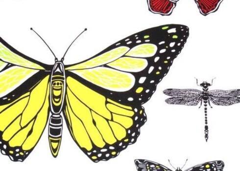 Insektsommer.Silketrykk med sterke farger (kr 2800 pr. rull, Cole & Son). Foto: Cole & Son