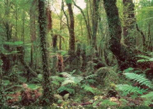 Kitchy 70-tall.Som å vandre i en skog med trær og blader. Fototapet (kr 650 for 368 x 254 cm, Komar).