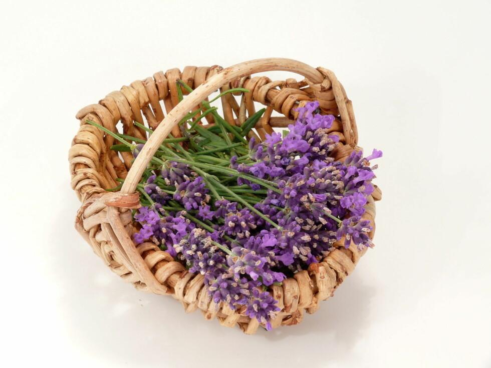LAVENDEL: Du bør rett og slett alltid ha denne urten i huset.  Foto: Thinkstock.com