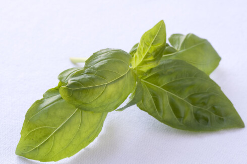 FOR MAGEN: Basilikum er bra for magen. Ha mer fersk basilikum i supper, sauser eller salat.  Foto: Thinkstock