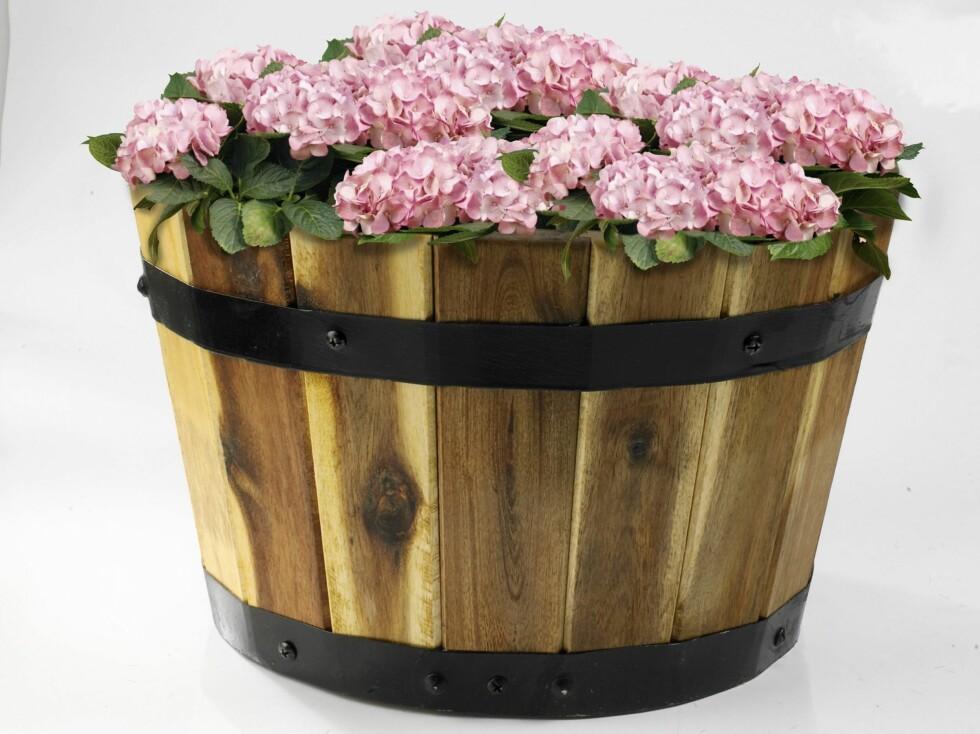 Blomsterpotte i tre, Clas Ohlson, kr 349 for tre stk. Foto: Produsenten
