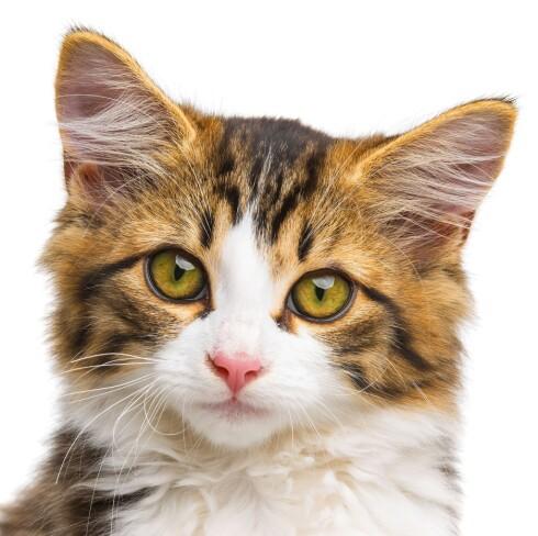 NUSSELIG SKREKK: Katteangst kan oppstå etter en skummel opplevelse i barndommen. Foto: NTB Scanpix