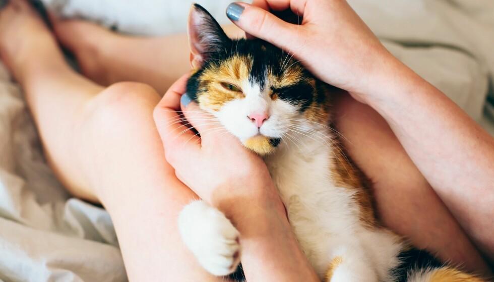 GODT FOR MENTAL HELSE: Du skal ikke kimse av de positive effektene det kan ha å sove med kjæledyret. Foto: NTB Scanpix