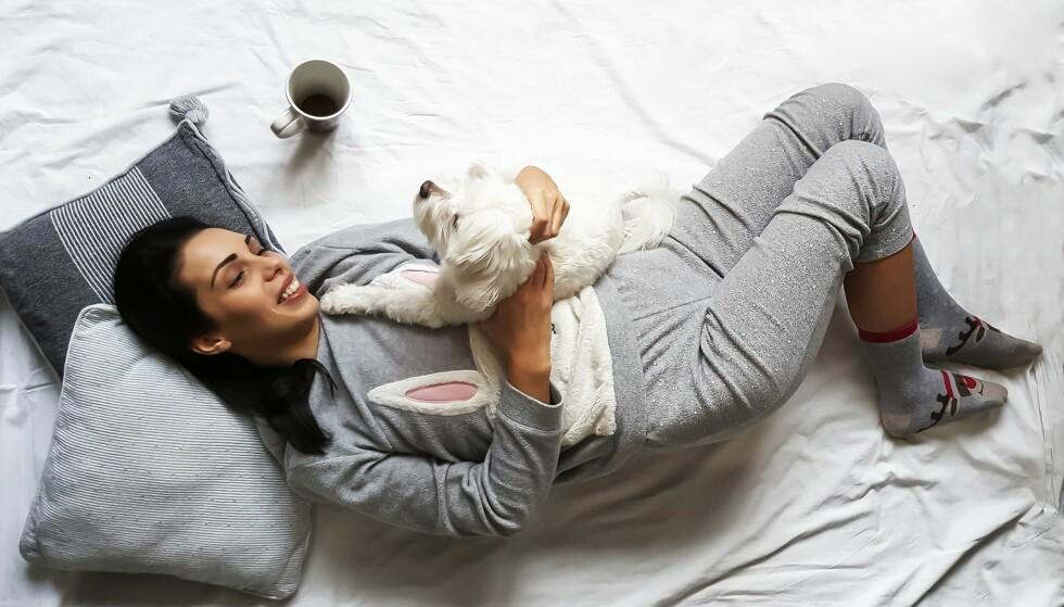 HUSDYR: Unngå å ha kjæledyret i senga, pelsen er nemlig grobunn for midd. FOTO: NTB Scanpix.