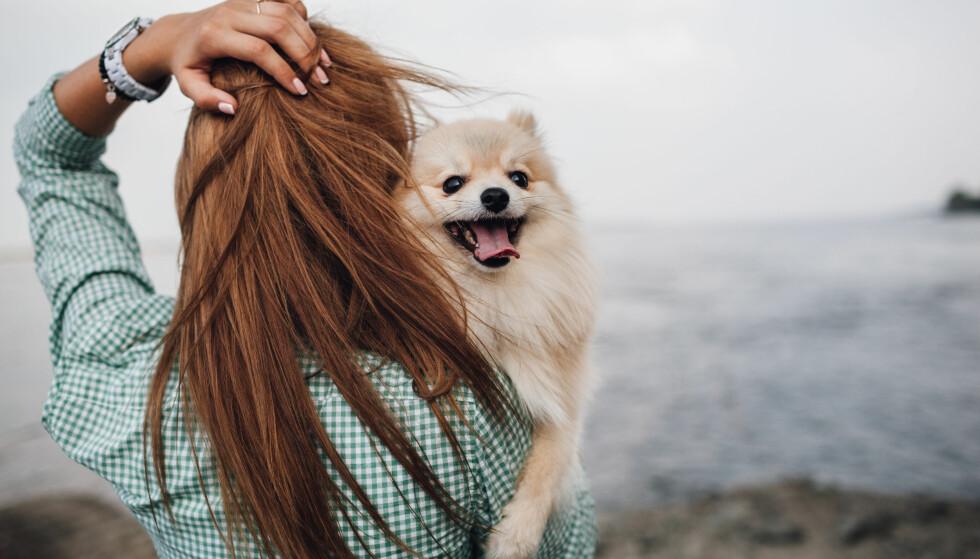 EN HUN SOM ER SOM EN SELV: – Man sier jo gjerne «som hund, så eier», og det er vel noe i det, sier ekspert. Foto: Scanpix