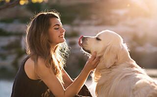Svensk studie: Hundeeiere er friskere og lever lenger