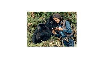 Hvem drepte egentlig gorillaekspert Dian Fossey? 32 år senere er det brutale drapet fremdeles uløst