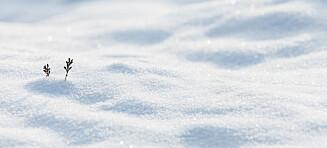 Nå må du legge dyna i snøen