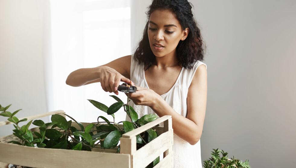 GRØNNE PLANTER: Har du heller ikke så veldig grønne fingre? Her er plantene det er så pg si umulig å ta livet av. FOTO: NTB Scanpix