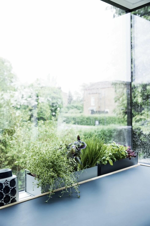 Det kommer så mye sol inn av hjørnevinduet at det nesten fungerer som et drivhus. Krydder-urtene står i plantekasser fra Ferm Living. Vasen er et arvet.