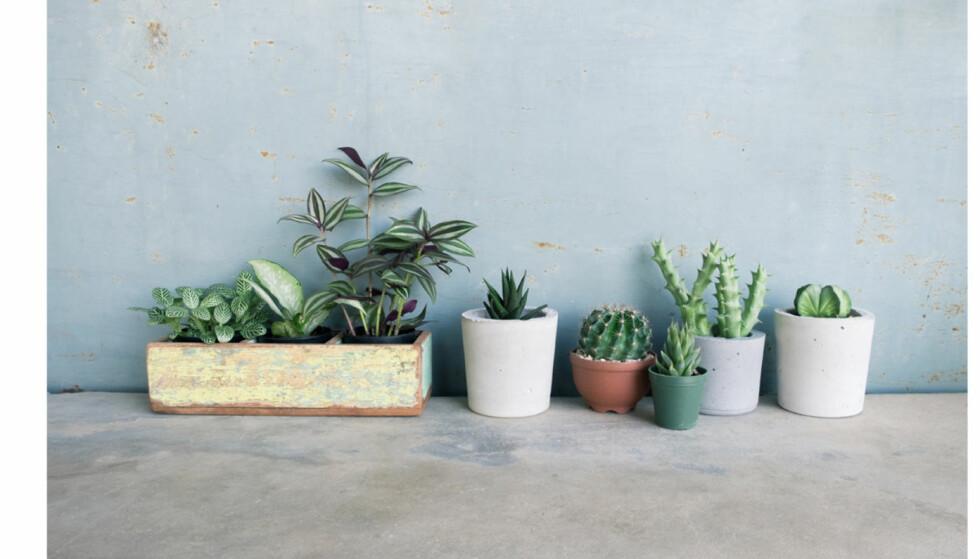 Her er plantene alle klarer å holde liv i