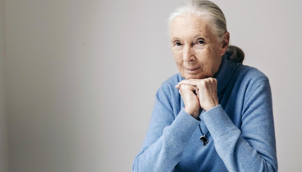 INSPIRERENDE DAME: I dag er Jane Goodall 83 år, og har fremdeles et brennende engasjement for dyreliv og miljøvern. Foto: NTB Scanpix