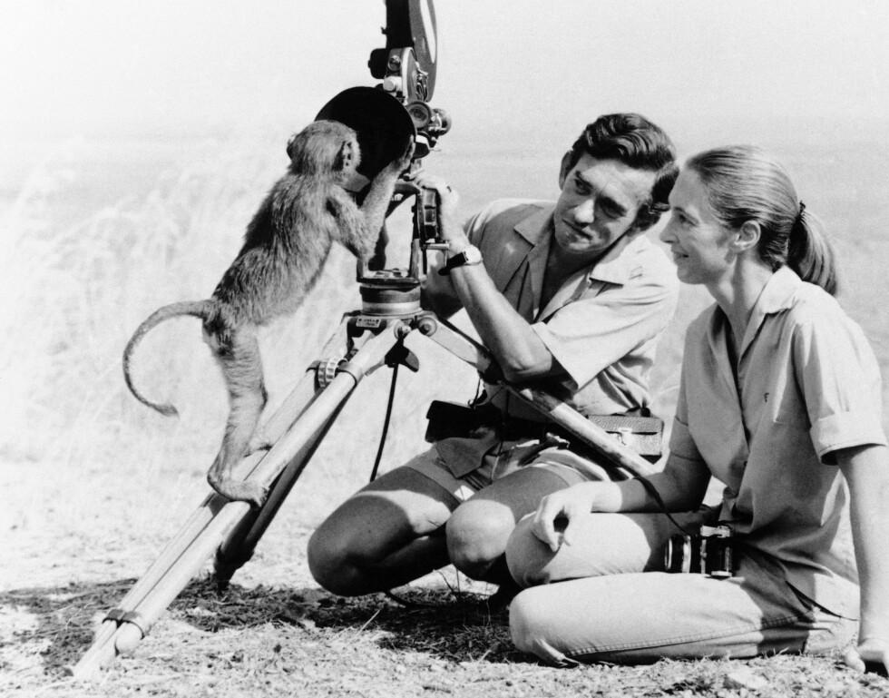BRUDD: Forskjellige ønsker og mål gjorde at Jane Goodall og Hugo van Lawick gikk hvert til sitt i 1974. Han fortsatte å jobbe i Serengeti, mens Jane fulgte sjimpansene i Gombe Stream National Park. Foto: NTB Scanpix