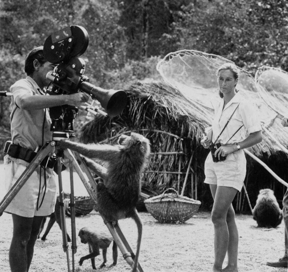 BLE HYRET INN: Naturfotograf Hugo van Lawick fikk oppdraget med å dra til Tanzania for å dokumentere Jane Goodalls arbeid. Lite visste de to at amors piler skulle treffe dem under Lawicks opphold. Foto: NTB Scanpix