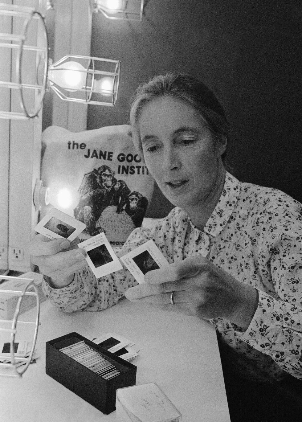 OPPRETTET INSTITUTT: I 1977 ble The Jane Goodall Institute (JGI) etablert, og antropologen fortsatte å forske på dyr og jobbe for økt fokus på miljøvern. Foto: NTB Scanpix