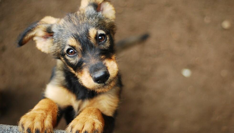 HUND: Hunden både vil og kan forstå både følelser og ord hos eieren. FOTO: NTB Scanpix