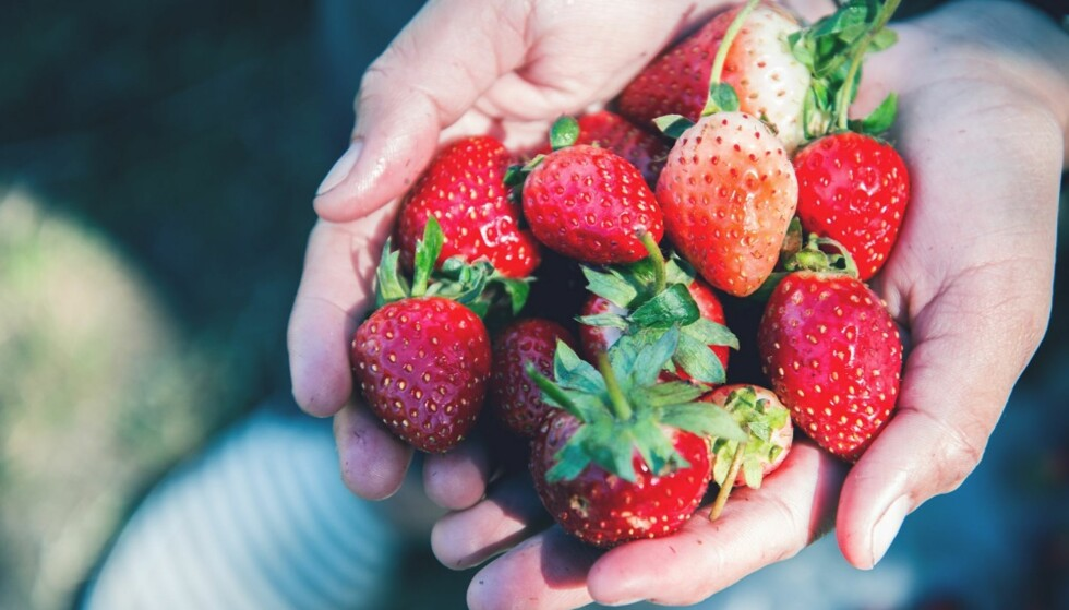 <strong>C-VITAMIN:</strong> Jordbær inneholder mye vitamin C. FOTO: NTB Scanpix