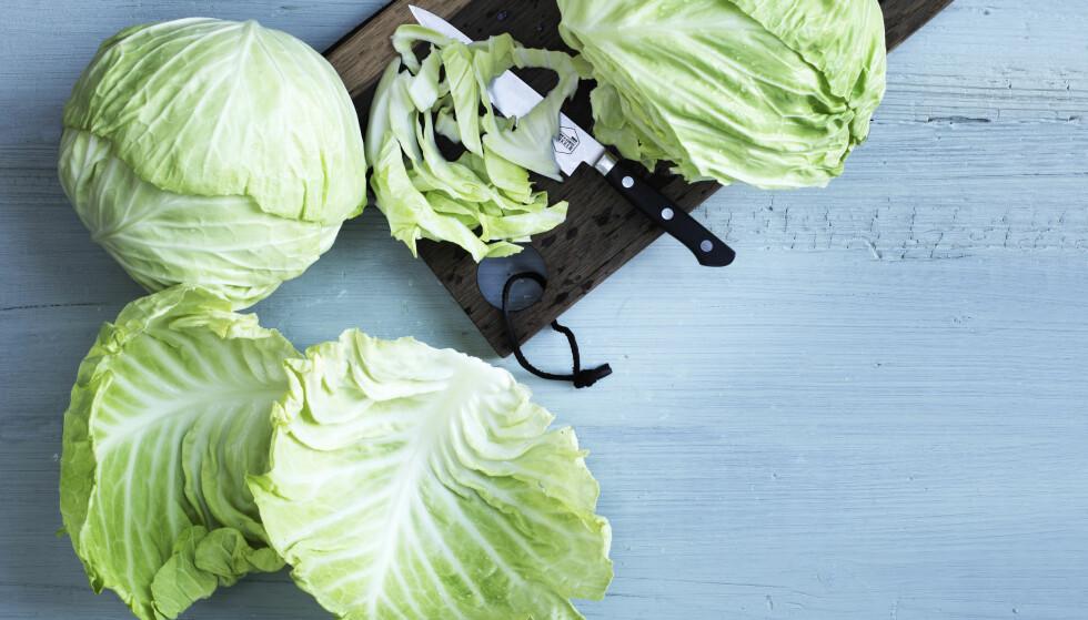 HODEKÅL: Hodekål kan brukes til så mye mer enn fårikål. Her får du tre spennende oppskrifter med denne litt trauste grønnsaken. FOTO: Columbus Leth