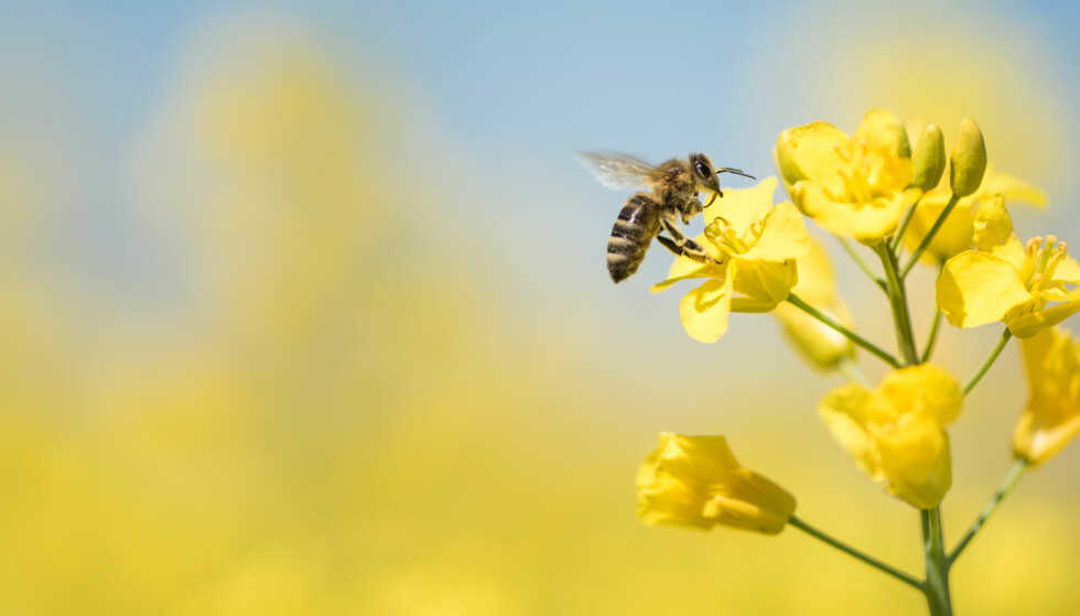 KAN VÆRE FARLIG: Får du symptomer andre steder enn stikkstedet kan det være snakk om en allergisk reaksjon. FOTO: NTB Scanpix