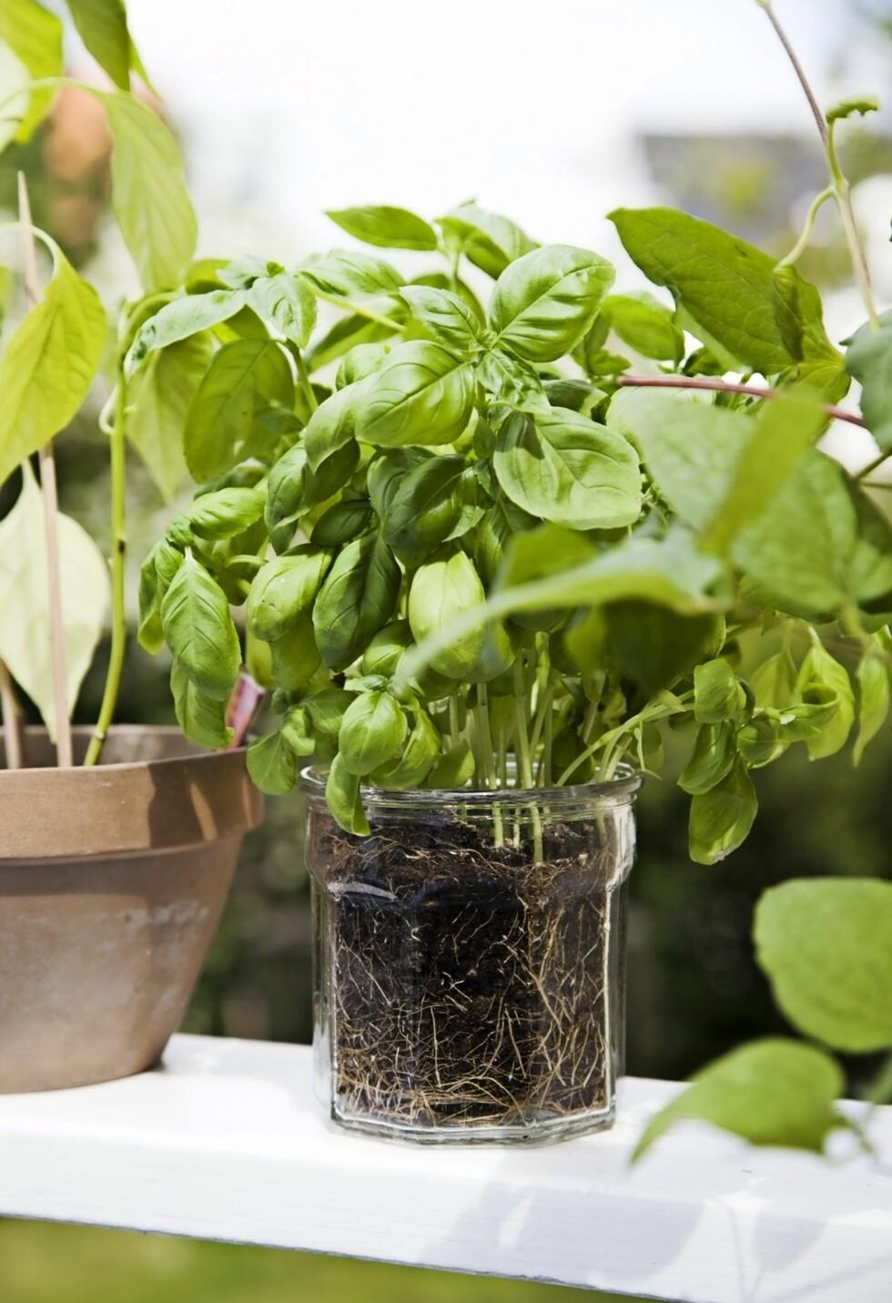 Bruk gelenderkanten eller et ekstra bord til krydderurter i potter. Da er de lett tilgjengelige når dere sitter ved bordet.