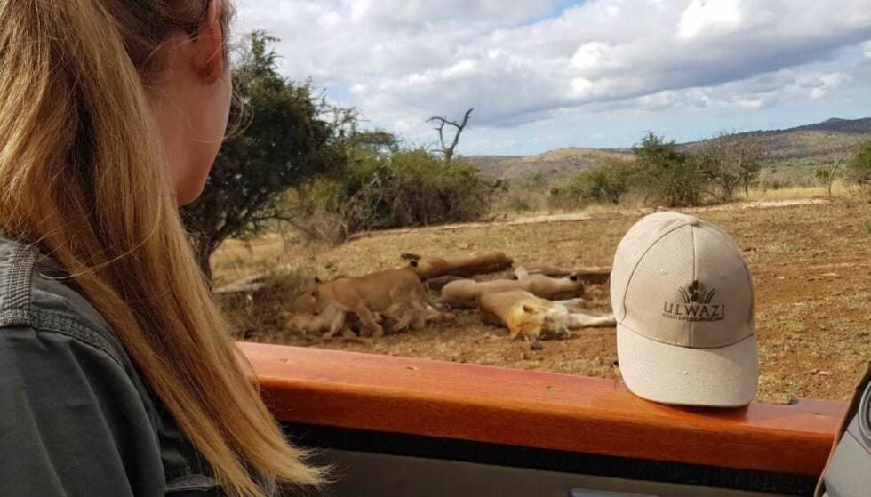 <strong>NÆRKONTAKT MED LØVER:</strong> I jobben treffer hun daglig potensielt farlige dyr. Reservatet er hjem til alle «de fem store», det vil si løver, leoparder, neshorn, elefanter og bøfler. FOTO: Privat