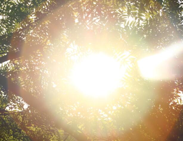 VITAMIN D ER VIKTIG: Nordmenn får for lite sol, så det er viktig å få i seg vitamin D på andre måter. Foto: Scanpix