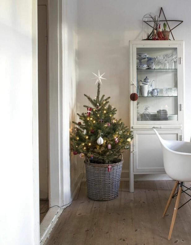 Juletreet er med rot, Så Emilie kan plante det ut når julen er over. Vitrineskapet er fra House Doctor, papirkulene er fra Nordal og stjernen fra Søstrene Grene. I skapet står Royal Copenhagen-servise som er arvet.