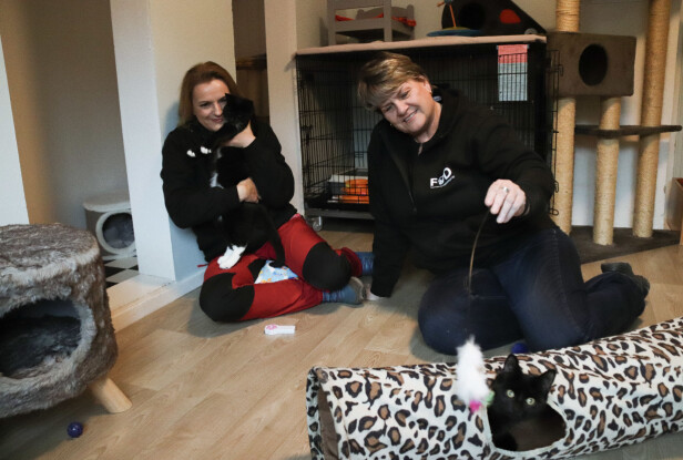 INNE PÅ KATTEHUSET: I dette rommet befinner det seg åtte katter. Mette og Stine håper at alle vil finne nye, trygge hjem. I mellomtiden, lever de det gode liv på FOD. FOTO: Ida Bergersen