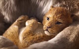 Traileren til «Løvenes Konge» og «Dumbo» er her