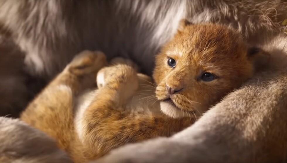 PÅ KINO I 2019: Traileren til den nye Løvenes Konge-filmen er sluppet og vi gleder oss så mye. Foto: Skjermdump fra YouTube